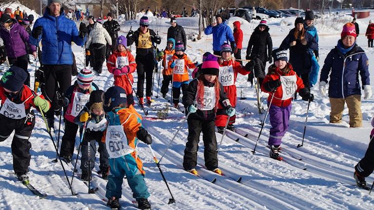 Burträskrännet. Först startade knattegruppen, 800 m skidåkning. Foto Anneli Malm.