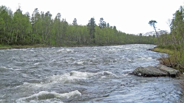 Vindelälven uppströms Ammarnäs