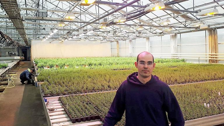 Philipp Stawarz hortonom och odlingsansvarig på Hällnäs handelsträdgård