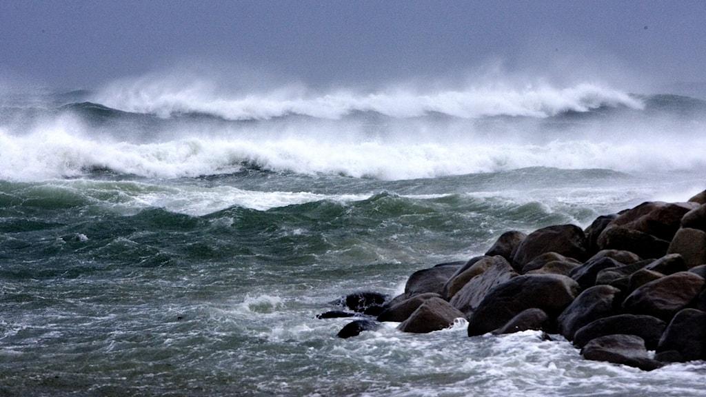 Stormvindar piskar sand och hav. Foto: Pontus Lundahl/TT