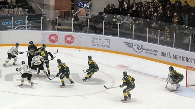 björklöven på defensiven mot AIK