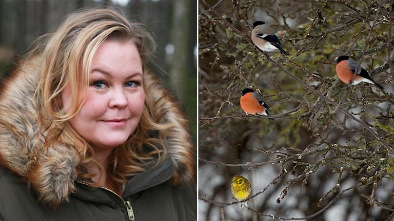 Domherren är rätt julen 2018, eftersom naturen och skogen varit stor inom inredning. Det säger Erica Dahlgren, spanare i P4.