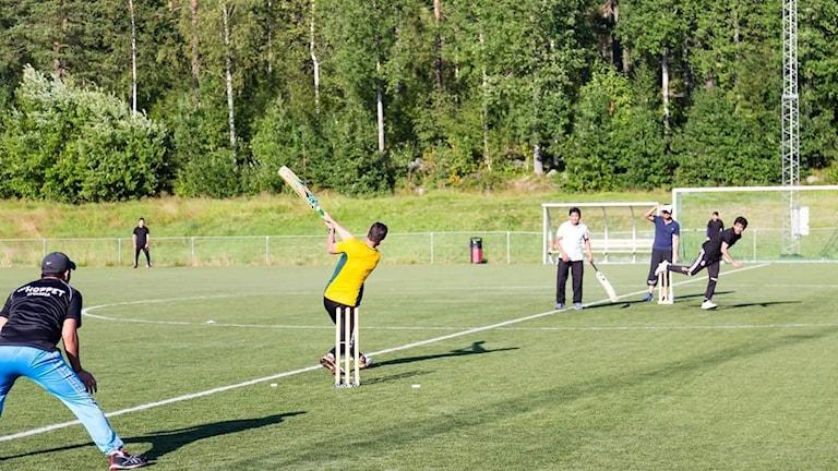 umeå cricket club träning