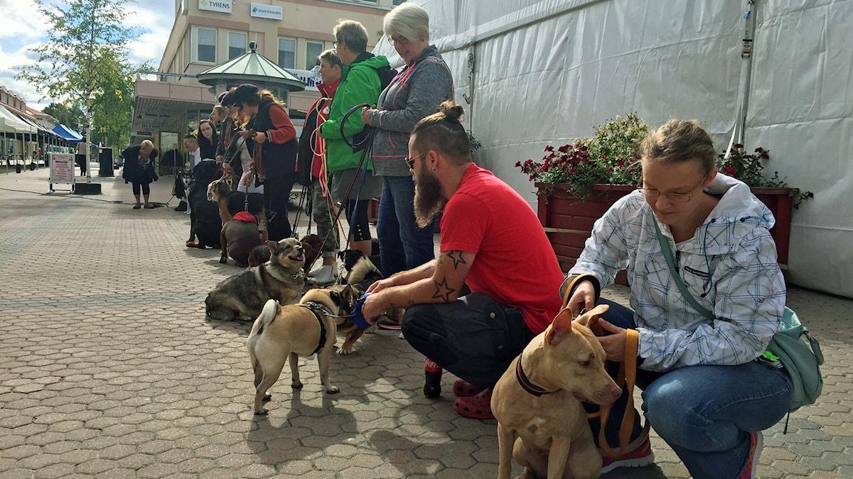 Hundparad på torget i Lycksele