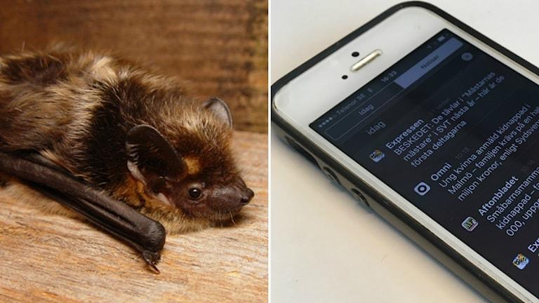 En fladdermus och en mobiltelefon.