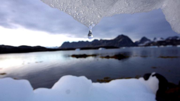 En vattendroppe som strax ska falla från smältande snö. I bakgrunden öppet vatten och ett isberg.
