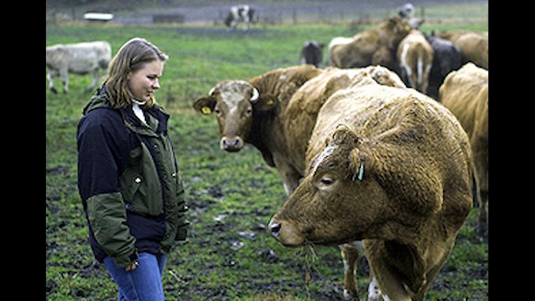Sedan 2009 sköts djurskyddskontrollen av länsstyrelsen som tog över från kommunerna. Foto: Gunnar Lundmark/Scanpix