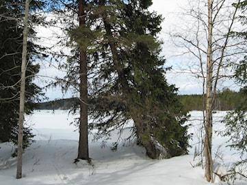 Skogsägare stämmer staten för utebliven ersättning