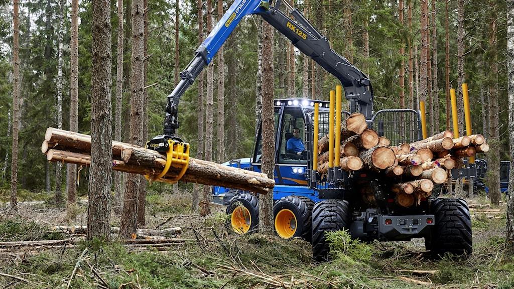 Rottne skotare som lastar träd i skogen. Foto: Pressbild