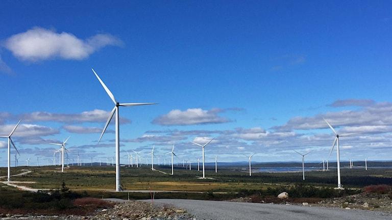 Sveriges största vindkraftpark Blaiken
