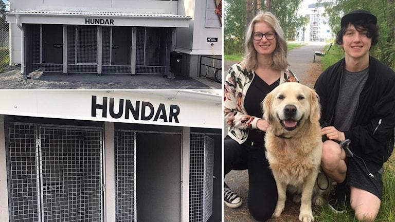 Ett kollage med hundburar utanför Ica Maxi i Östersund och en bild på Alva Leijon och Jesper Nygren samt hunden Messi
