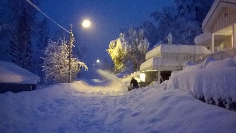 60 cm snö i Ursviken utanför Skellefteå söndag kväll. Fotograf: Gunn Edlund.
