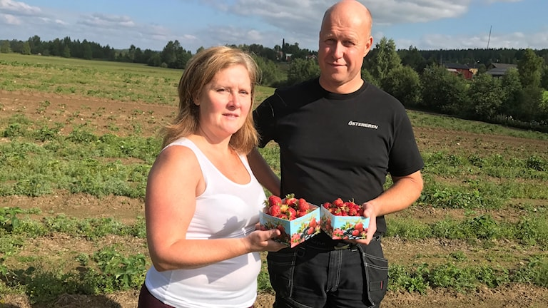 Camilla och Olof Östergren vid deras jordgubbsodling i Håkmark