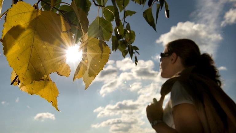 Solens strålar gnom löv på träd.