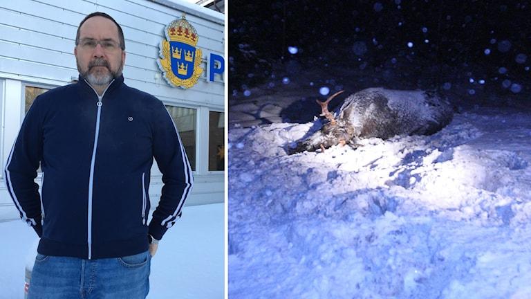 Joacim Lundqvist, polis, samt en påkörd älg kollage