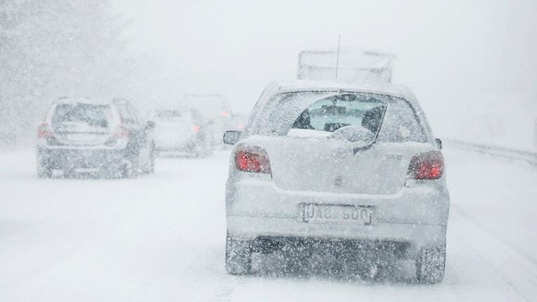 Bilar i kraftigt snöfall.