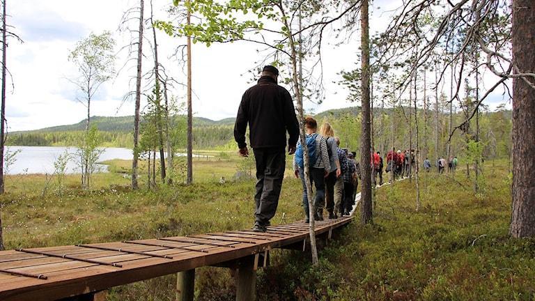 En rad människor som vandrar på en spångad led vid kanten av en tjärn.