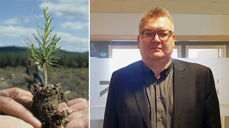 Petter Hetta, advokat som företräder Skogsnickes förre vd