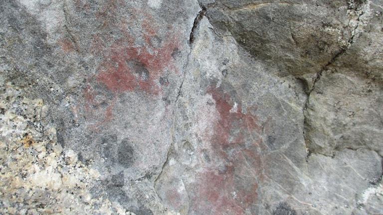Rödockra har fäst vid stenen