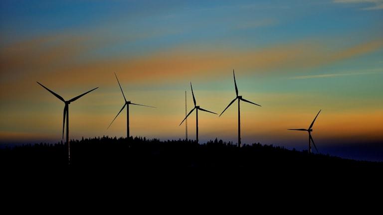 Vindkraftverk i närheten av Malå