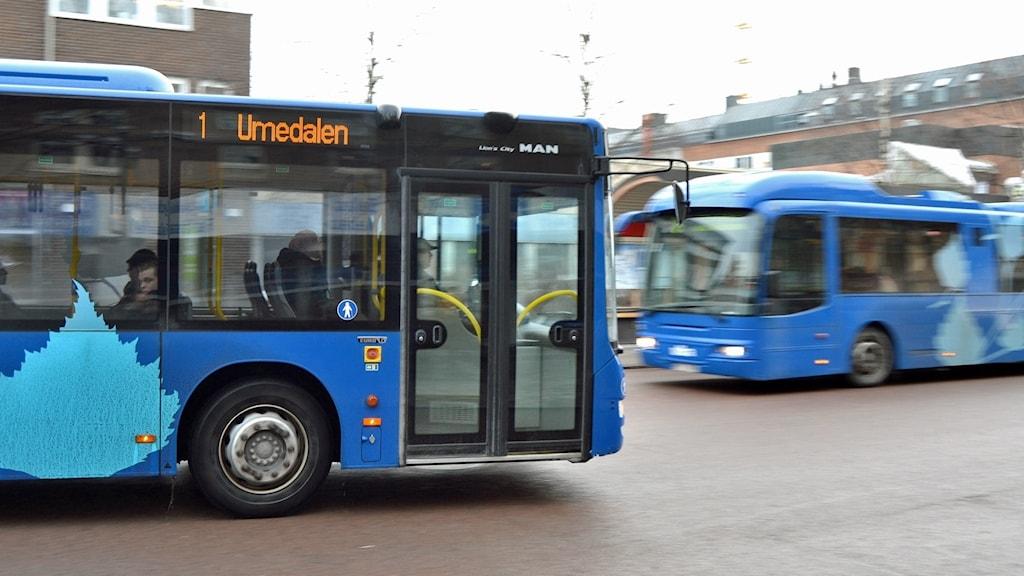 Bussar på Vasaplan i Umeå. Foto: Peter Öberg, Sveriges Radio.