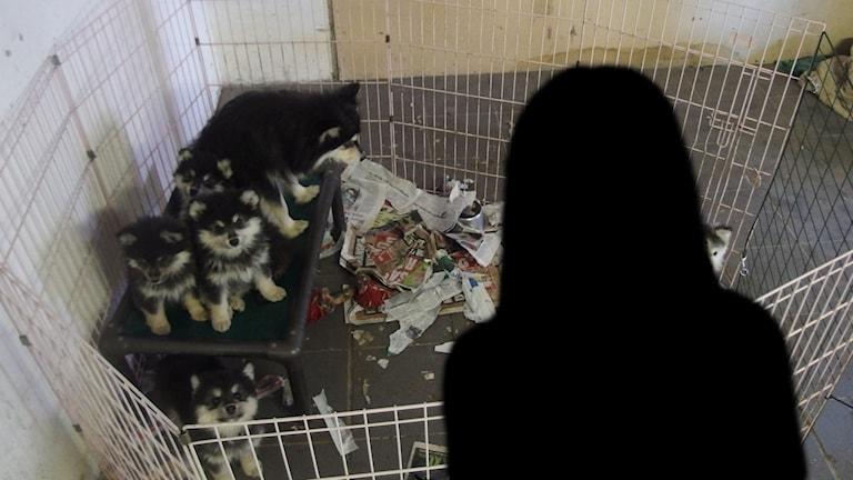 Beslagtagna hundar och en siluett