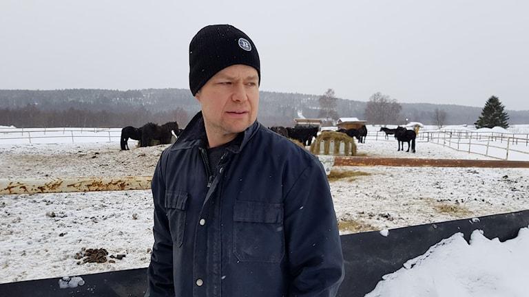 Fredrik Andersson, hästuppfödare utanför Umeå, framför en hage med hästar