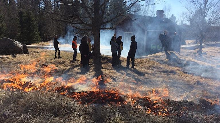Länsstyrelsen bränner ängsmark. Foto Ulla Öhman