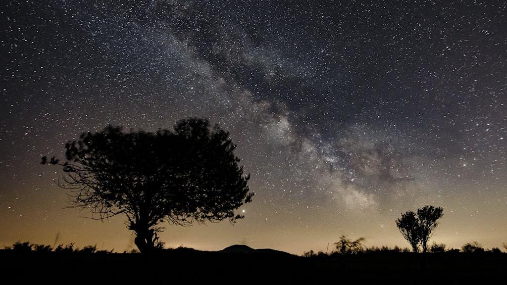Stjärnor på natthimlen.