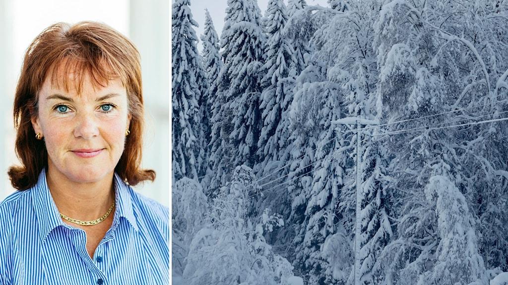Bildkollage. Till vänster: Lena Berglund, reginchef på EON. Till höger: Snötyngda grenar ligger över en luftledning i Västernorrland.