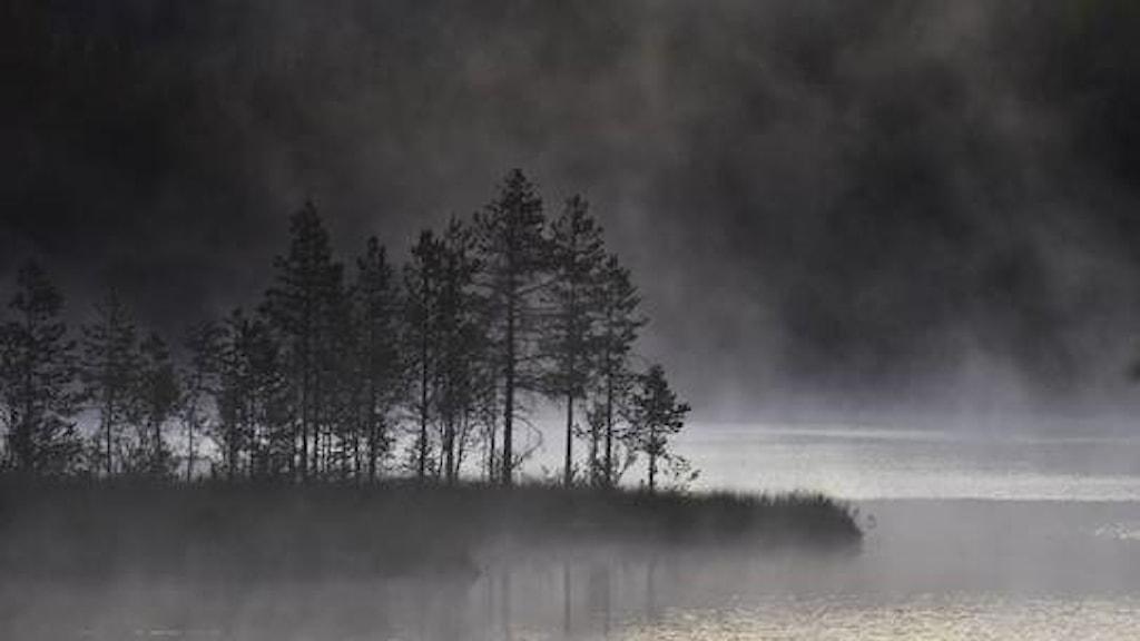 En udde med smågranar sticker ut från vänster i bild i en sjö. Dimma lättar från vattenytan, och ljuset gör att bilden nästan ser ut att vara i svartvitt.