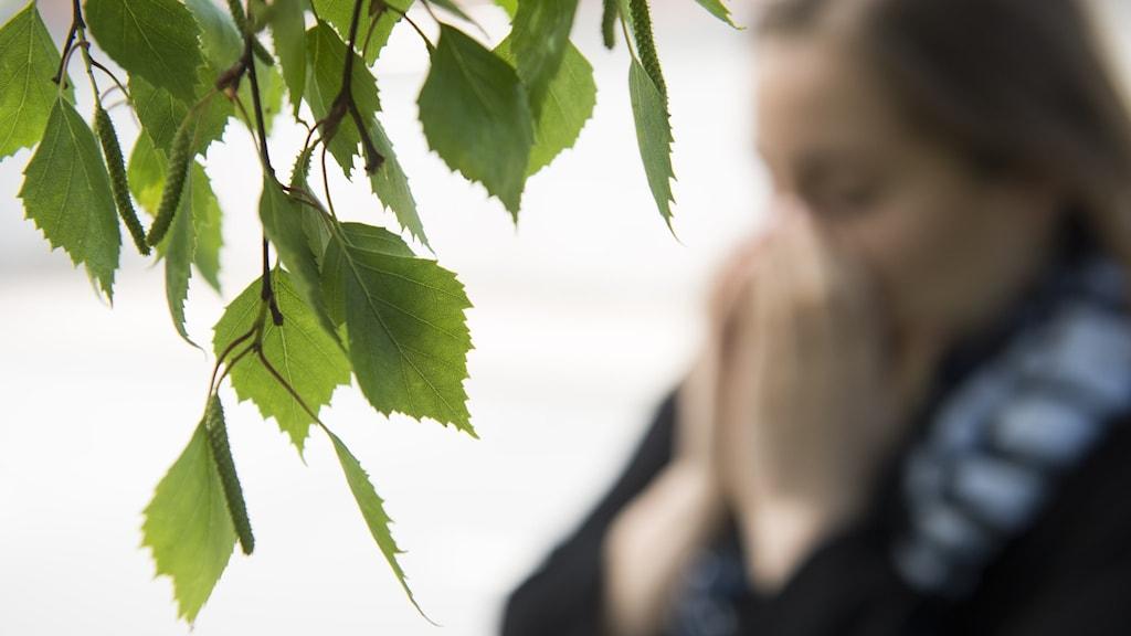 En allergisk kvinna nyser i närheten av en björk  Foto: Erik Nylander/TT