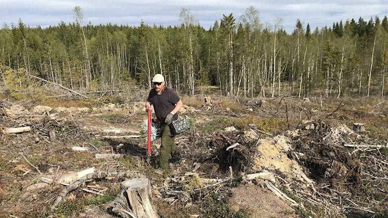 En man bärandes på ett planteringsrör går över ett kalhygge.