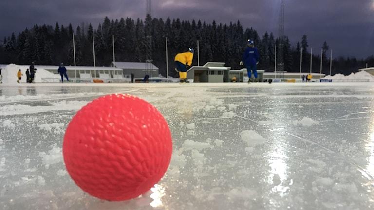 En bandyboll på Gärdehov i Sundsvall. I bakgrunden tränar landalaget i bandy-
