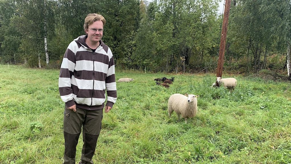 Edward Haglund står i hagen med sina får. Foto Ulla Öhman