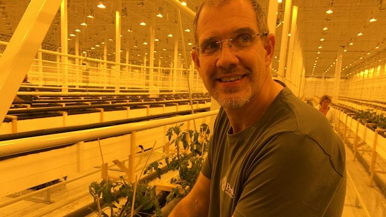 Daniel Brännström i ett växthus i Härnösand vid Peckas naturodling