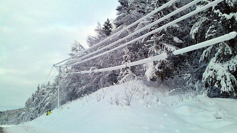 Snötyngda elledningar i närheten av Viksjö. Foto: Christer Jonasson/Sveriges Radio