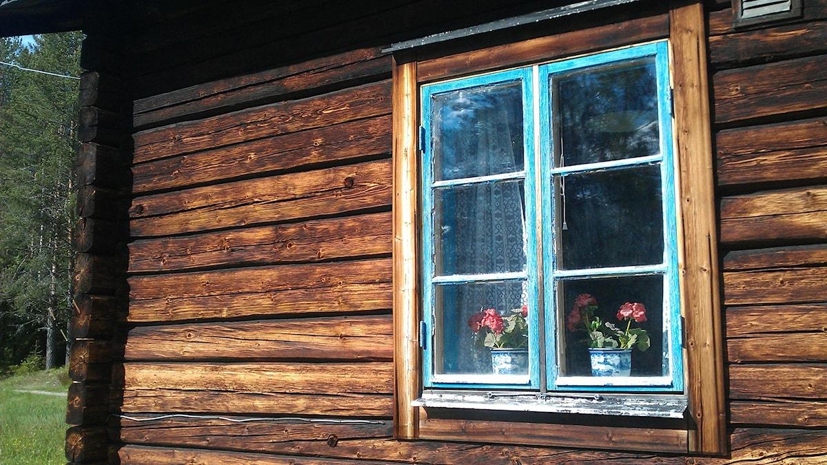 Vägg på timrad stuga med fönster. Foto: Karin Lönnå/Sveriges Radio
