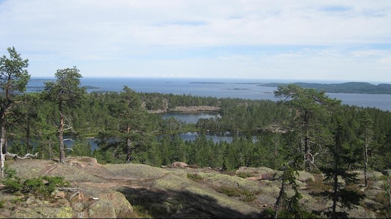 En vacker del av Norrland - Utsikt från Skuleberget. Foto Ulla Öhman