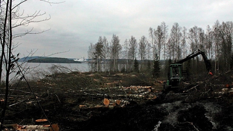 Här låg Ankarsviks sågverk.