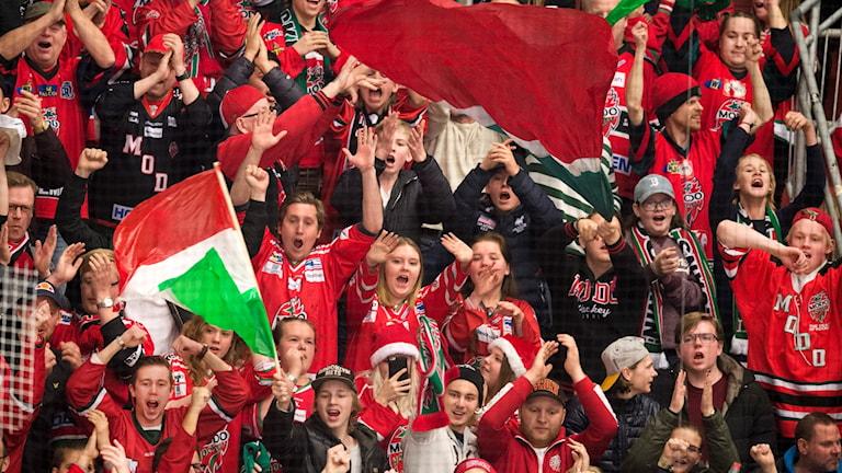 Modos fans jublar under matchen i hockeyallsvenskan mellan Timrå och Modo den 5 december 2016 i Timrå.