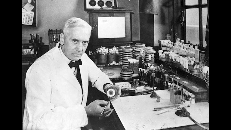 Det skotske professorn i bakteriologi Alexander Fleming upptäckte genom en slump penicillinet 1929. En lyckad serendipitet ! Foto:TT