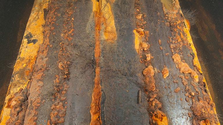Närbild på bakterien som gör att bron redan börjat rosta. Foto: Trafikverket
