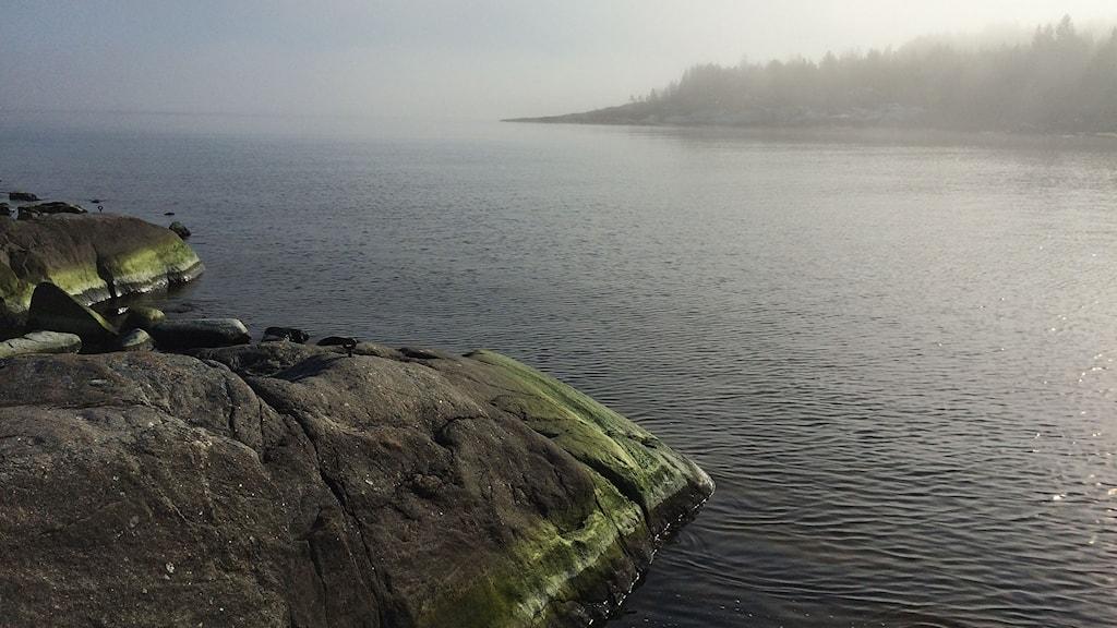 Havet vid Åstön. Foto: Niklas Axelsson/SR