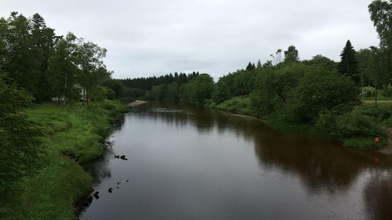 Ljustorpsån i höjd med Lögdö bruk. Foto: Jennifer Engström/SR