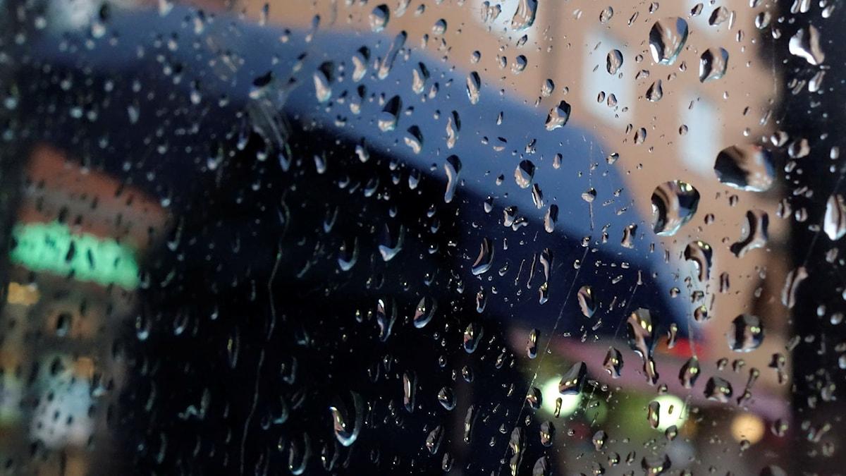 Kvinna med paraply väntar på bussen. Foto: Hasse Holmberg/TT
