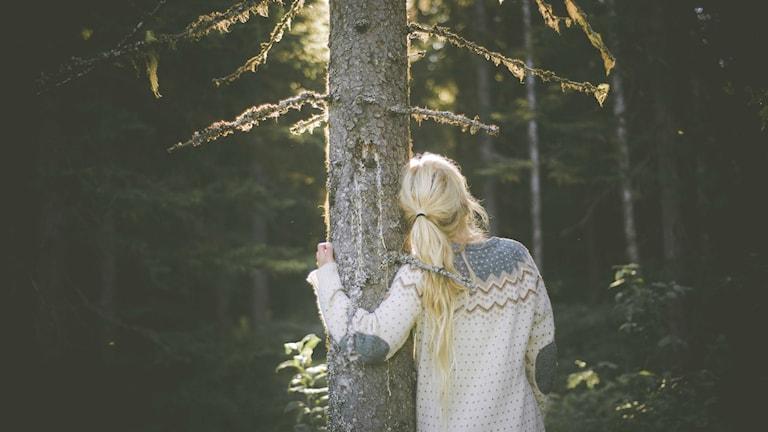 Jonna Jintons bildbidrag till tävlingen Sveriges bästa trädbild. Foto: Jonna Jinton