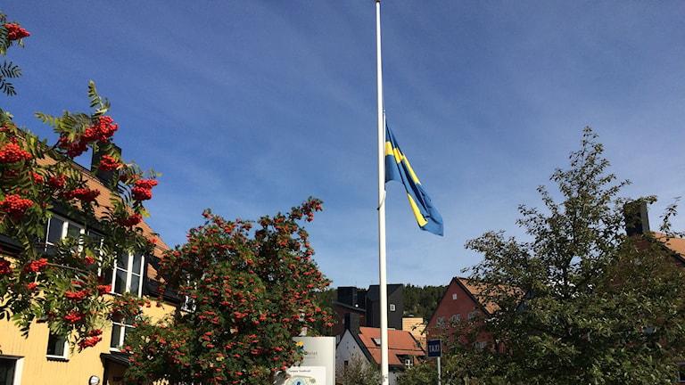 Flagga på halv stång vid Mittuniversitetet efter att en kvinnlig student mördats. Foto: Anna Ahlström/SR