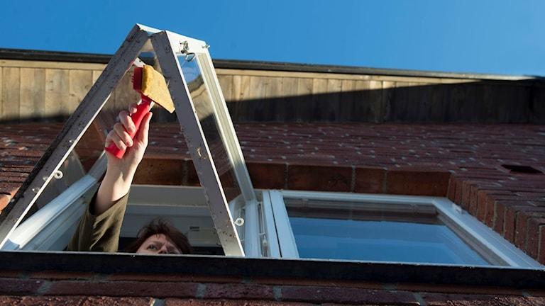 Kvinna tvättar smutsiga fönster på en villa med en fönsterskrapa. Foto: Fredrik Sandberg/TT