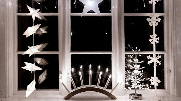 Adventsljusstakar och julstjärnor. Foto: Jessica Gow/TT
